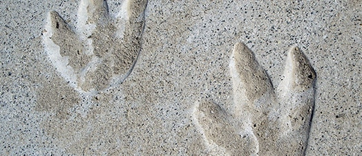 Dinosaur prints in cement at Cabazon Dinosaurs roadside attraction