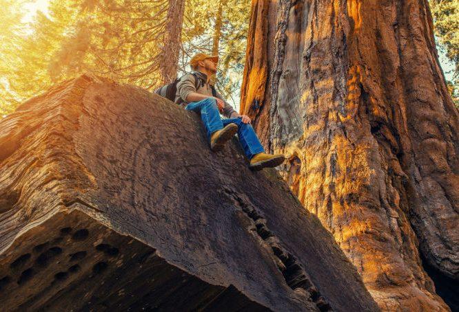 Man sitting on fallen sequoia tree