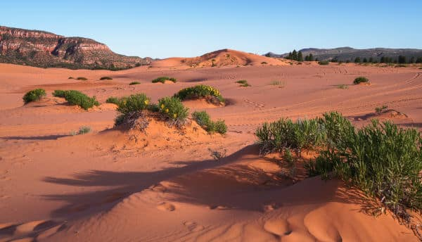 Coral Pink Sand Dunes Zion