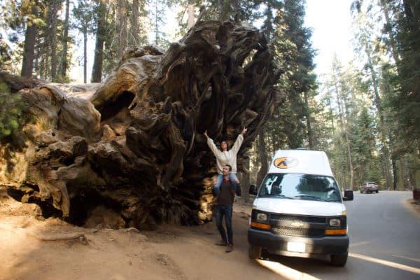 fallen Monarch Tree in Mariposa Grove Yosemite