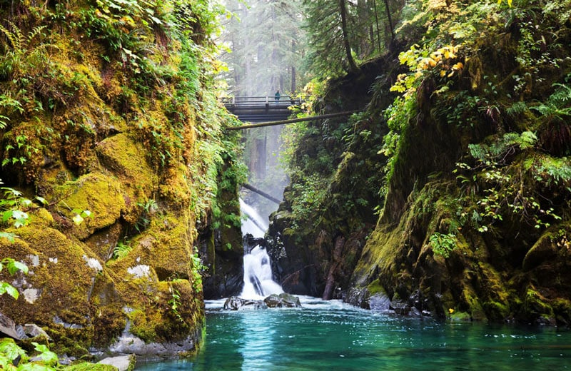 Siulaw State Forest Summer Campervan Road Trip Destinations in the USA