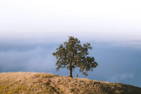 Tree swing-Ben Leo Davis